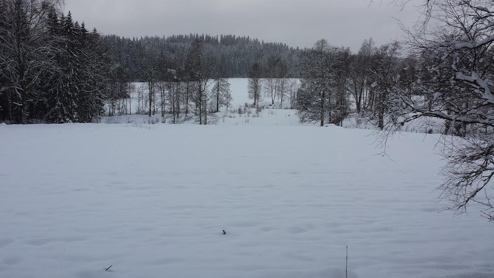 grönsksfält vinter